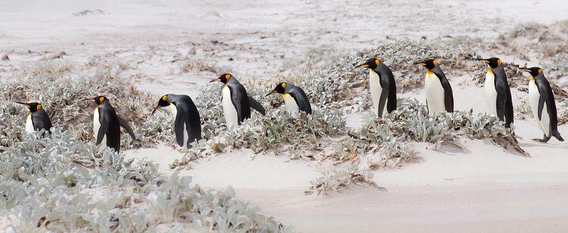 Let's continue with penguins van Claudia van Zanten