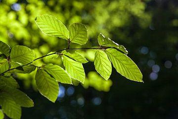 Bladeren in de zomer van Nel Diepstraten