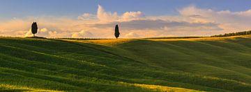 Cipress bomen in de Crete Senesi in de Toscane van Henk Meijer Photography