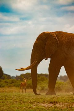 Olifant in Uganda van Julie Brunsting