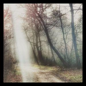 Zonnestralen verlichten jou pad van Menno Bausch