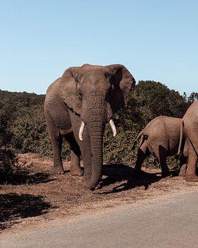 Afrikanische Elefanten-Safari von Ian Schepers