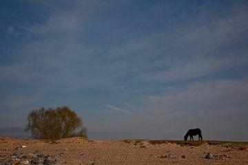 Landschap  van Mart van Zwam