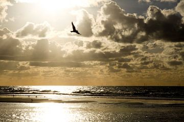 Noordzeekust van Cora Unk