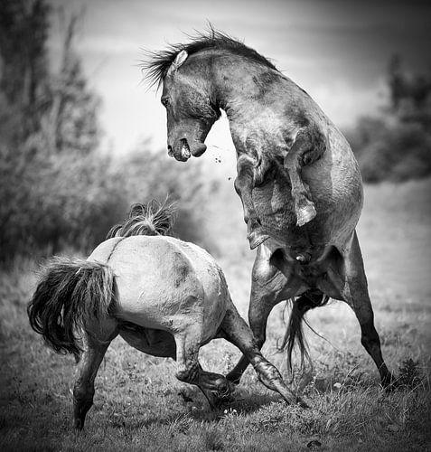Konikpaarden Gelimiteerde oplage 5 stuks