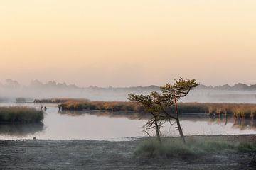 Kalmthoutse Heide bij zonsopgang van Bruno Hermans