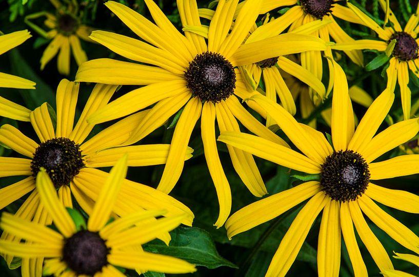 Meerdere gele bloemen van Photography by Karim