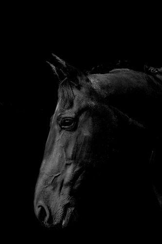 Het Friesche Paard van Gerwin Remmers