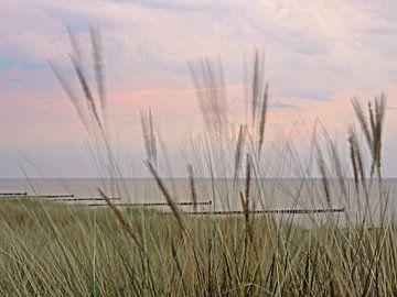 Dünengras im Wind von Katrin May