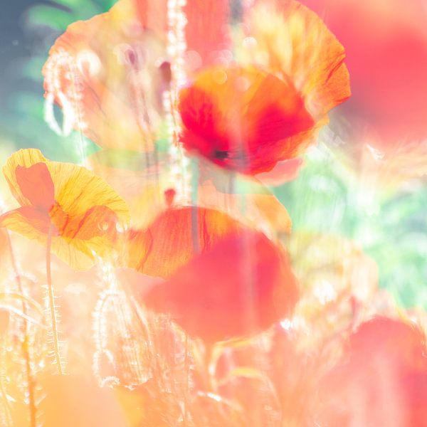 Sunny poppies van Nanda Bussers