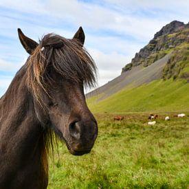 Island Pony von Robert Styppa