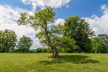 Landschaft mit Baum von Kok and Kok