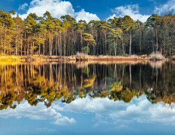 Oisterwijk Wälder und Sümpfe von Marleen Kuijpers