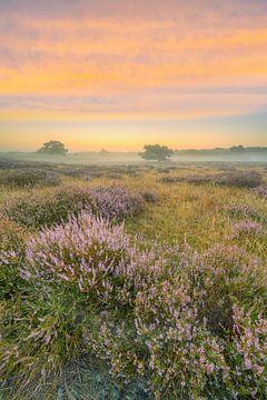Juste avant le lever du soleil dans les landes sur Michael Valjak