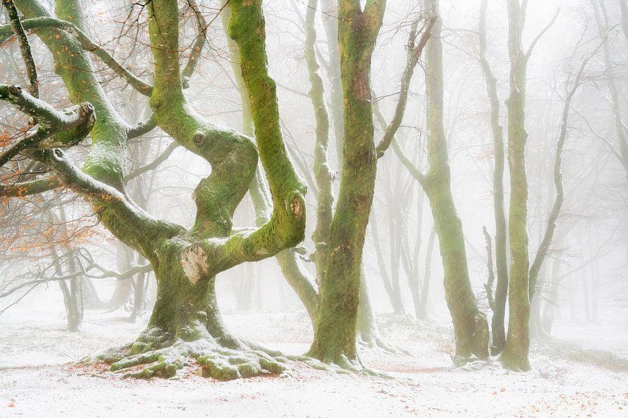 Say Freeze! van Lars van de Goor
