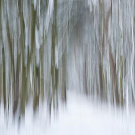 Sneeuw in het bos van Barbara Brolsma