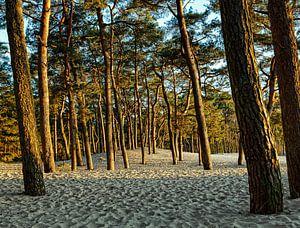 Bomen in het zand van