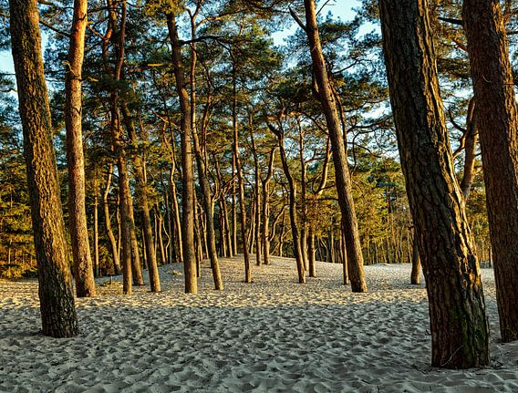 Bomen in het zand van Bart Verbrugge