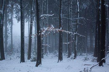 Winter in den Niederlanden von Marieke Smetsers