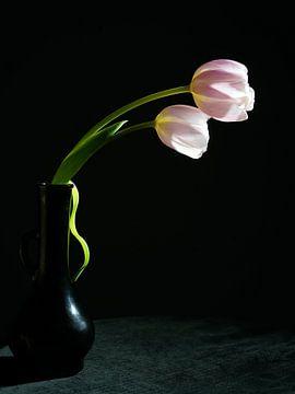Tulpen in Schwarz von Herman Peters