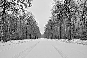 bos (lingebos) in sneeuw bedekt von Matthijs Temminck