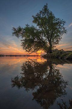 De magie van de mangrove boomwortels van Moetwil en van Dijk - Fotografie