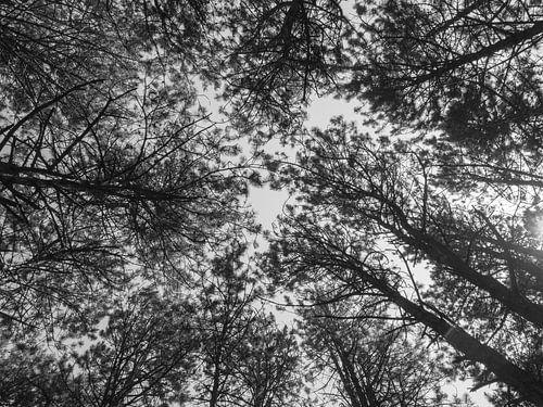 Les cimes des arbres sur Martijn Tilroe