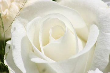 maagdelijk wit von Vittoria Roitero-Maas