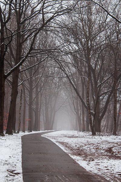 Amersfoortse bossen van Maarten Starink Photography