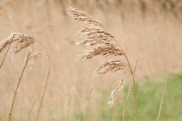 wehendes Gras im Wind von Hanneke Bantje