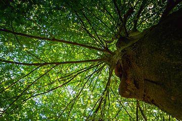 Boom in het bos van Stedom Fotografie