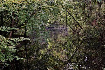 Diep in het bos van Pamela Fritschij