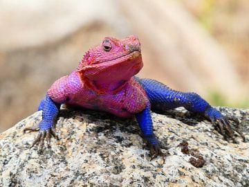 Rose salamander Tanzania van Rianne Magic moments