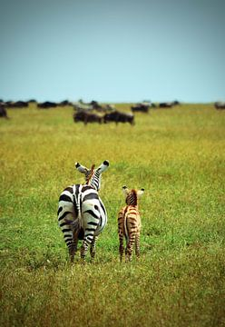 Moeder en baby zebra  van Jorien Melsen Loos