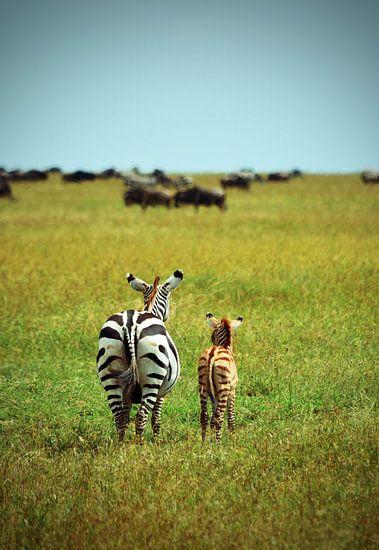 Moeder en baby zebra