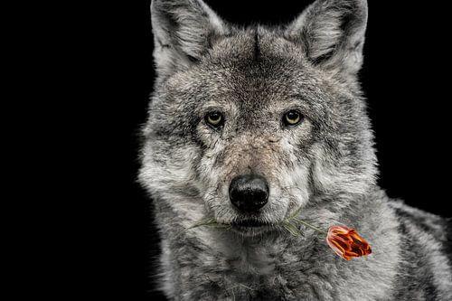 roodkapje van Jiske Wijmans @Artistieke Fotografie
