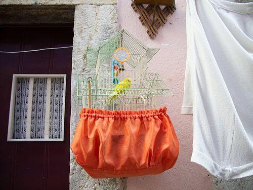 Oranje met groene vogelkooi  voor gele parkiet aan roze muur