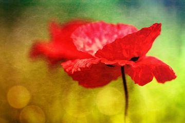 Entzückende Mohnblumen ...  von Bob Daalder