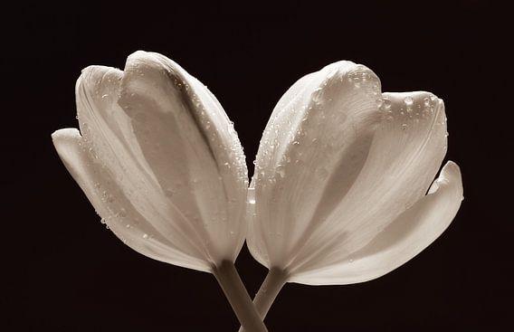 Twee tulpen met waterdruppels van LHJB Photography