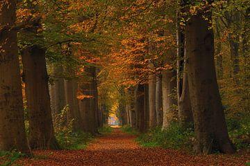 Laan in herfstkleuren van John Leeninga