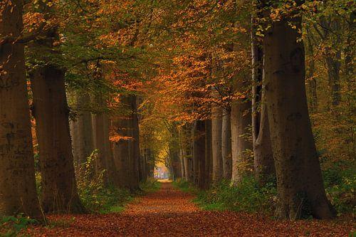 Laan in herfstkleuren van