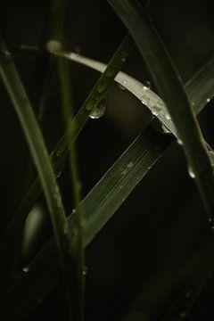 Regentropfen auf Ziergras (2/2) von Oog in Oog Fotografie