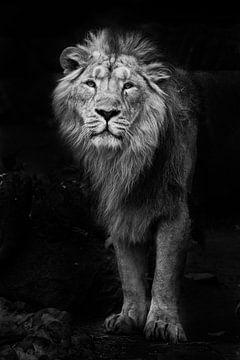 Minimalistisches Schwarz-Weiß-Noir-Foto eines Mannes mit einem mächtigen männlichen Löwen in nächtli von Michael Semenov
