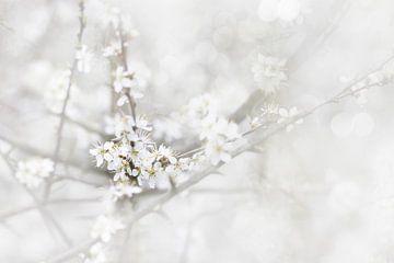 Lente bloesem van Ingrid Van Damme fotografie