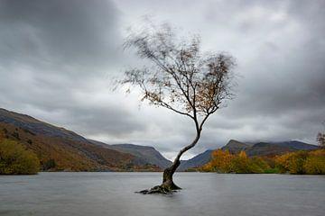 Baum im Wasser von Jeannette Kliebisch