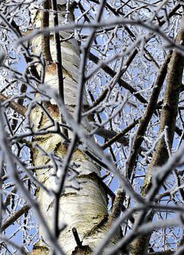 Zilverberk in de winter