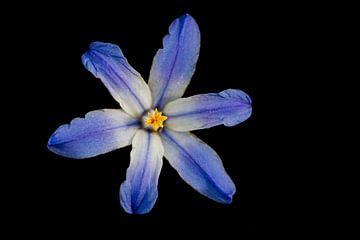 Blauwe bloem van Eelke Cooiman