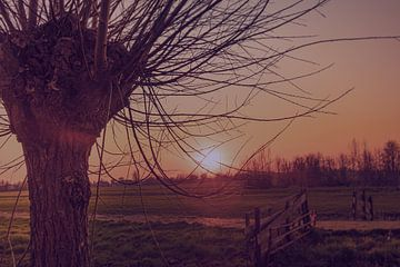 Polderlandschaft in goldener Stunde von Oscar Limahelu