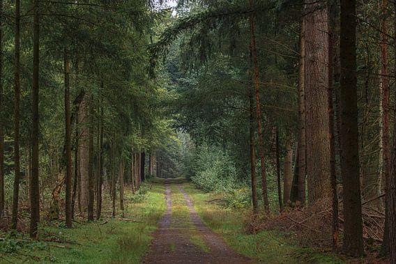 Het bospad in de zomer