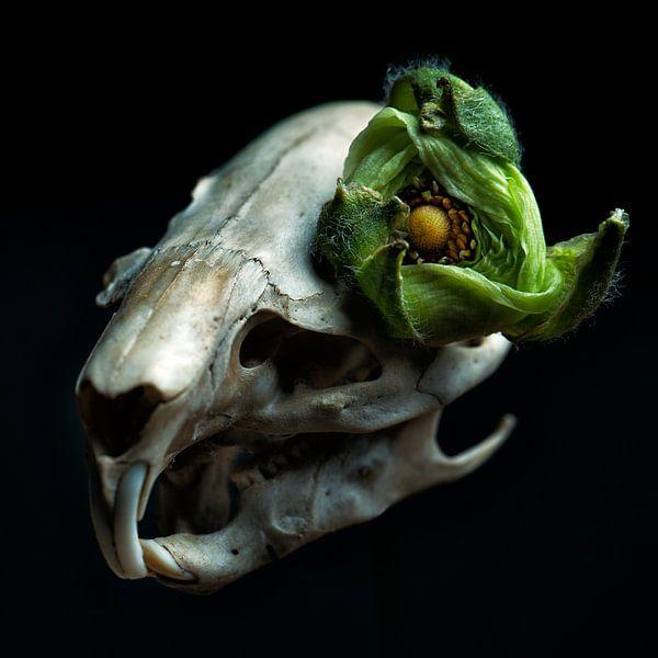 Muskus rat schedel met groene bloem als oog van Marian Korte
